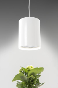 plant led sosp